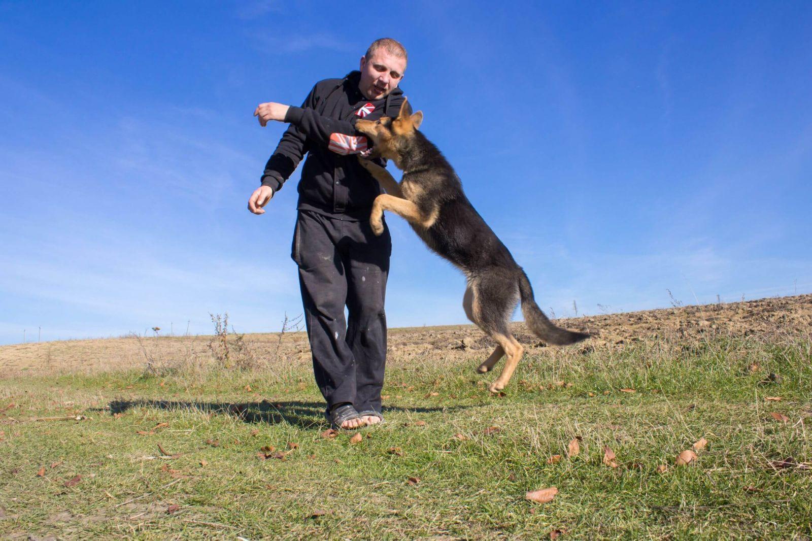 Dog biting a man's arm