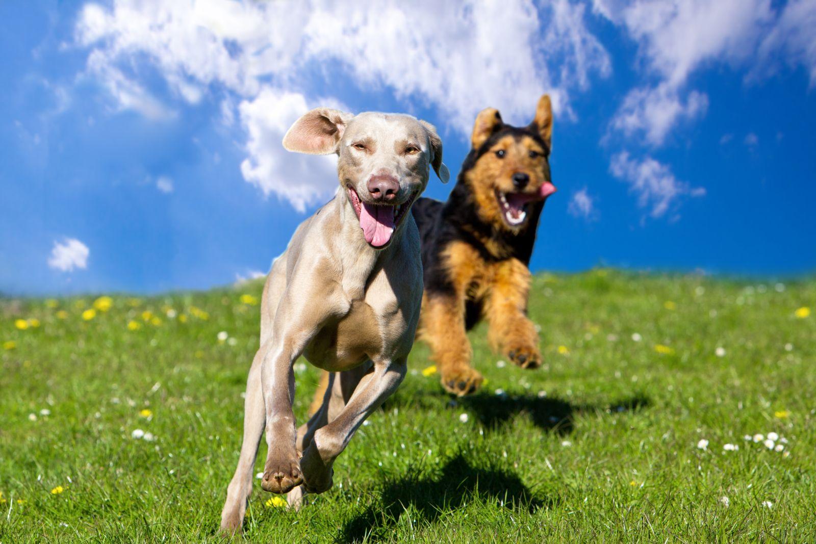 liberty missouri dog bite attorneys