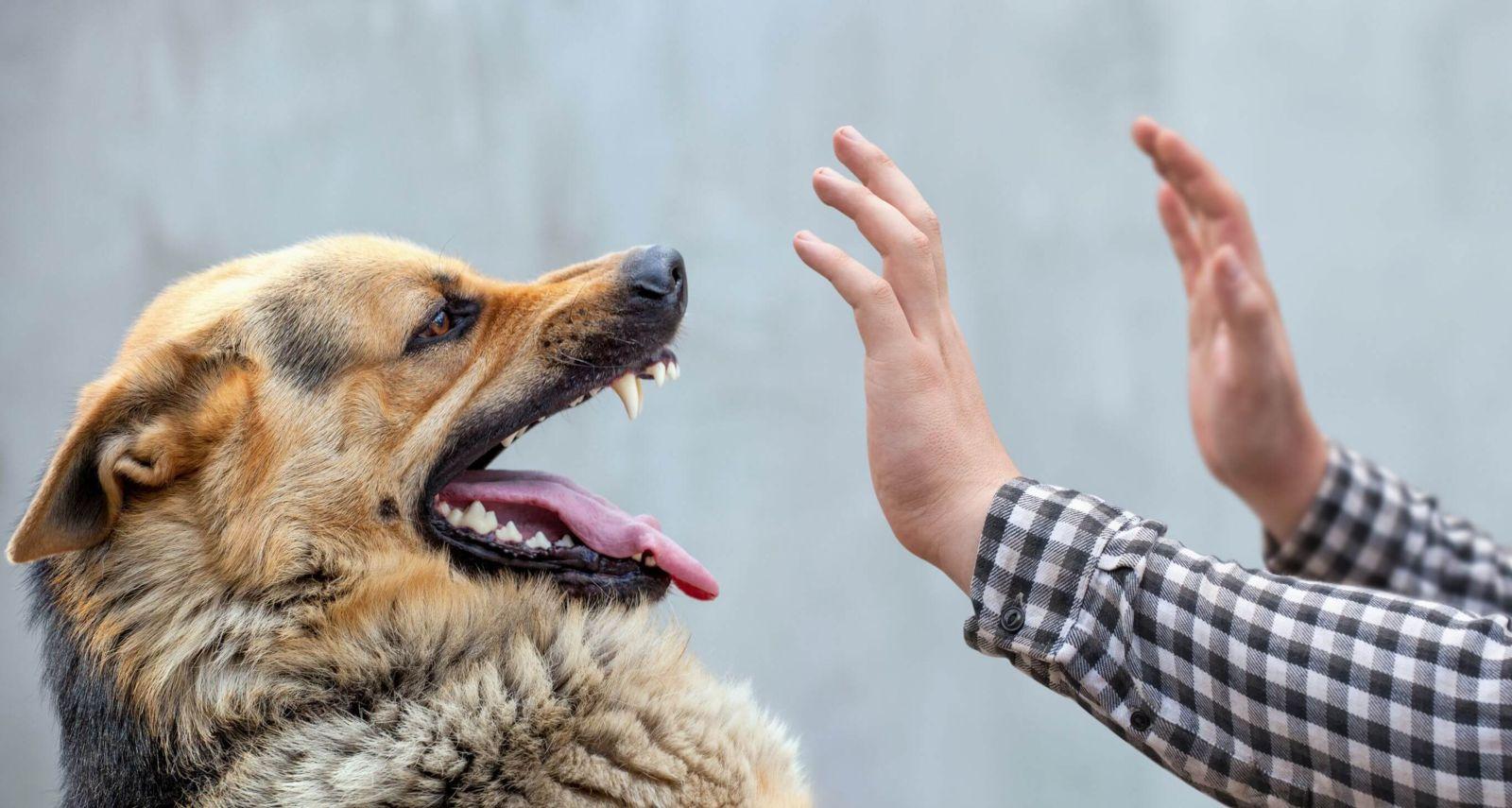 Missouri Dog Bite Insurance Claims