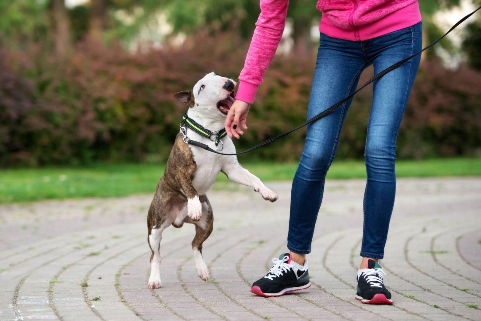 Relevant Evidence in a Dog Bite Case