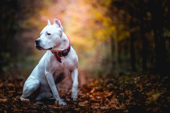 State law holds dog owners responsibile for injuries.