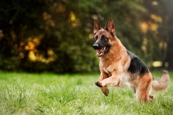 Our personal injury attorneys can help with claims for dog chase injuries.