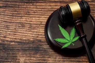 Marijuana Plant With a Judge's Gavel