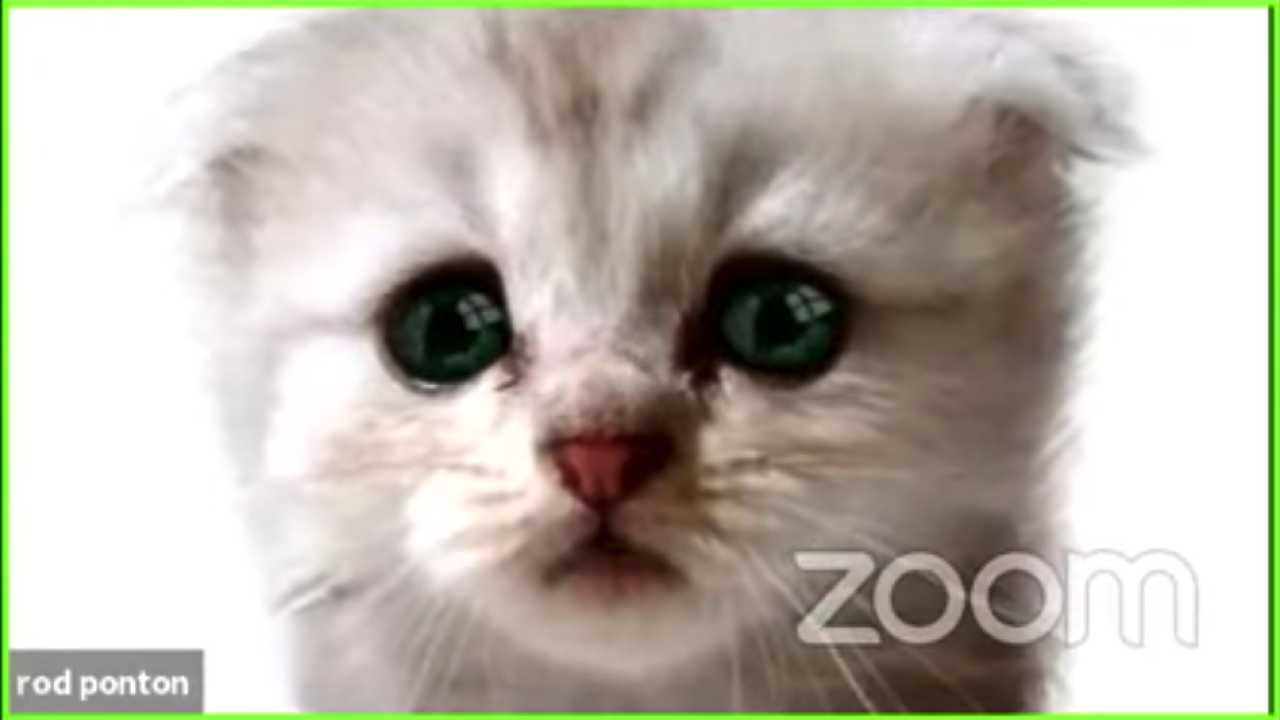 Zoom Lawyer Appears as a Cat in This Viral Zoom Court Hearing Mishap