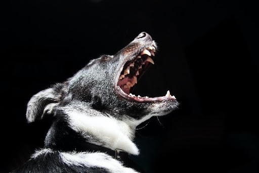 Dog Bite Laws Can Help You Receive Compensation