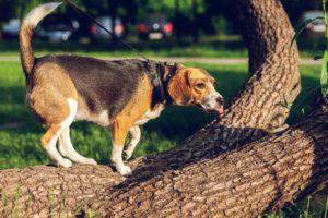 Bucks County Dog Bite Injury Lawyer