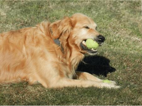 dog-bite-lawyer
