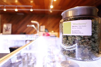 Get help with your marijuana business plan.