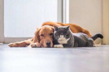 Pets are considered property in a Michigan divorce.