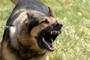 Arizona's strict liability for dog bites