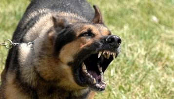 Flagstaff Dog Bite attorneys