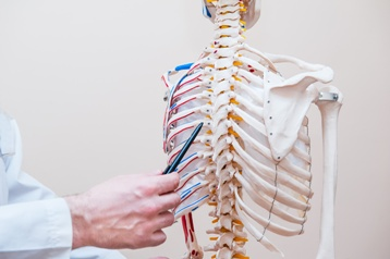 Doctor Explaining a Spine Injury With a Skeleton