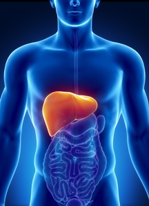 car accident liver injuries