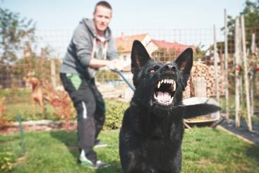 An Aggressive Dog on a Leash