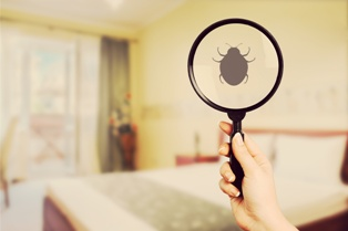 Woman Holding a Magnifying Glass and Inspecting a Bedbug in a Hotel Room