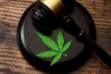 Marijuana Plant With a Gavel