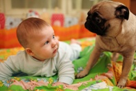 dog attacks on infants