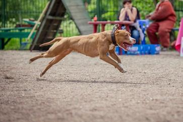 Dog Running Through the Park