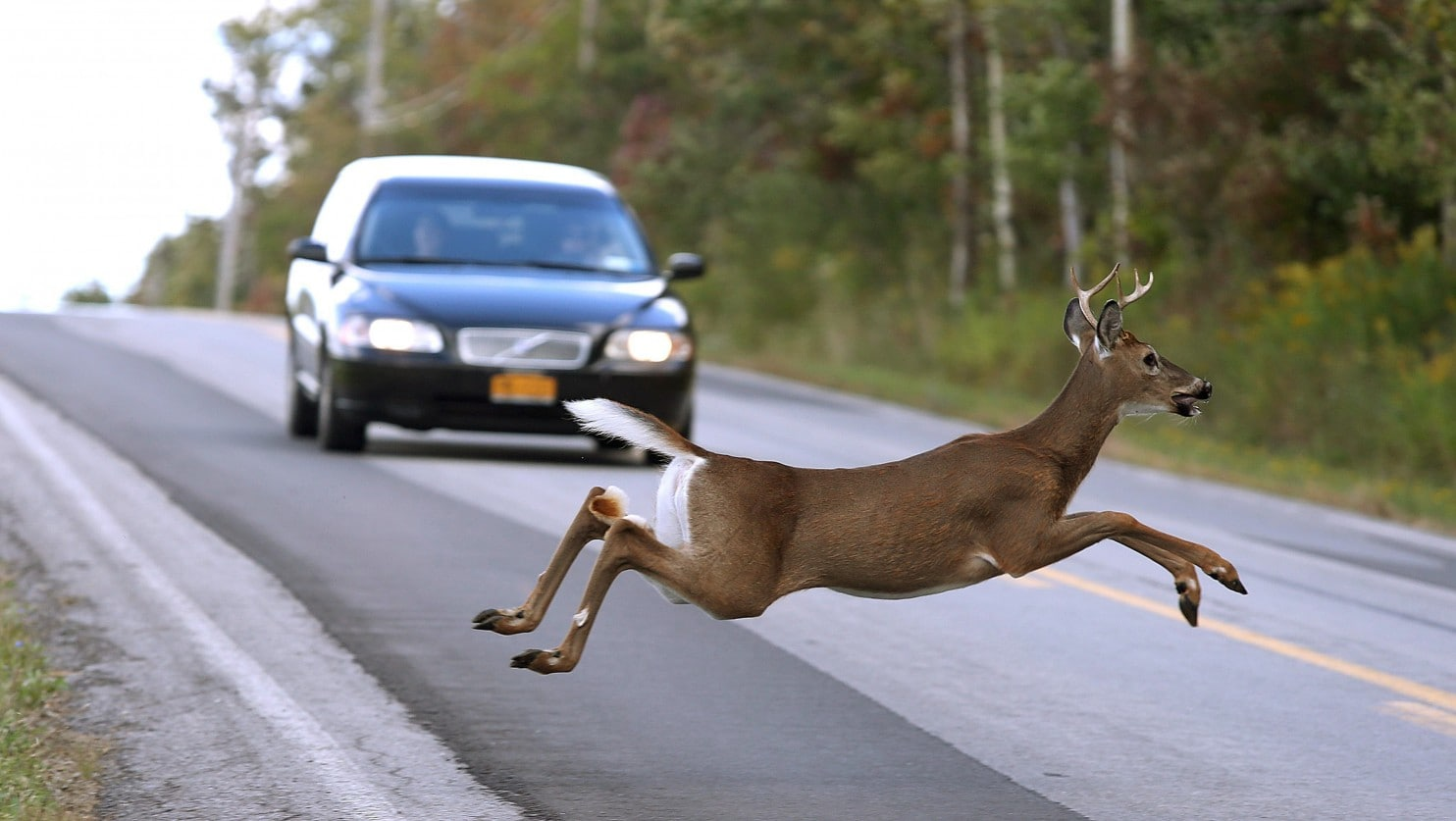 Deer darts out in front of oncoming vehicle