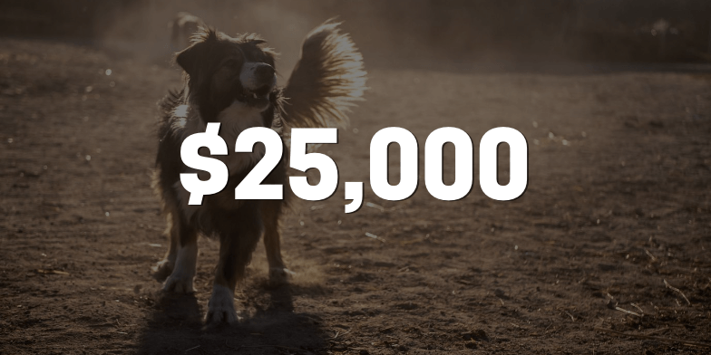 After Dog Bite Client Receives Double The Insurance Company's Offer