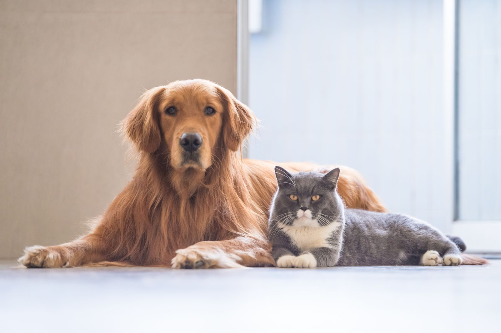 Companion Animals Can Help During Divorce