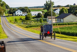 Amish Buggy Traveling on a Road