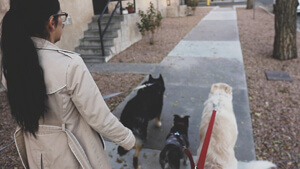 Albuquerque leash laws require your dog to be restrained at all times.