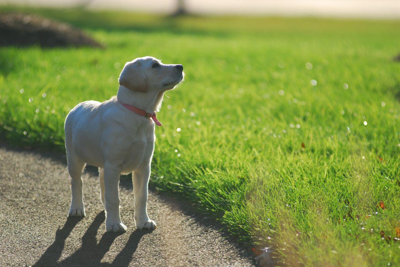 Dog in sunshine