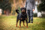 Dog bite defenses in CA
