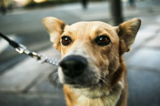 Sources of compensation in dog bite cases