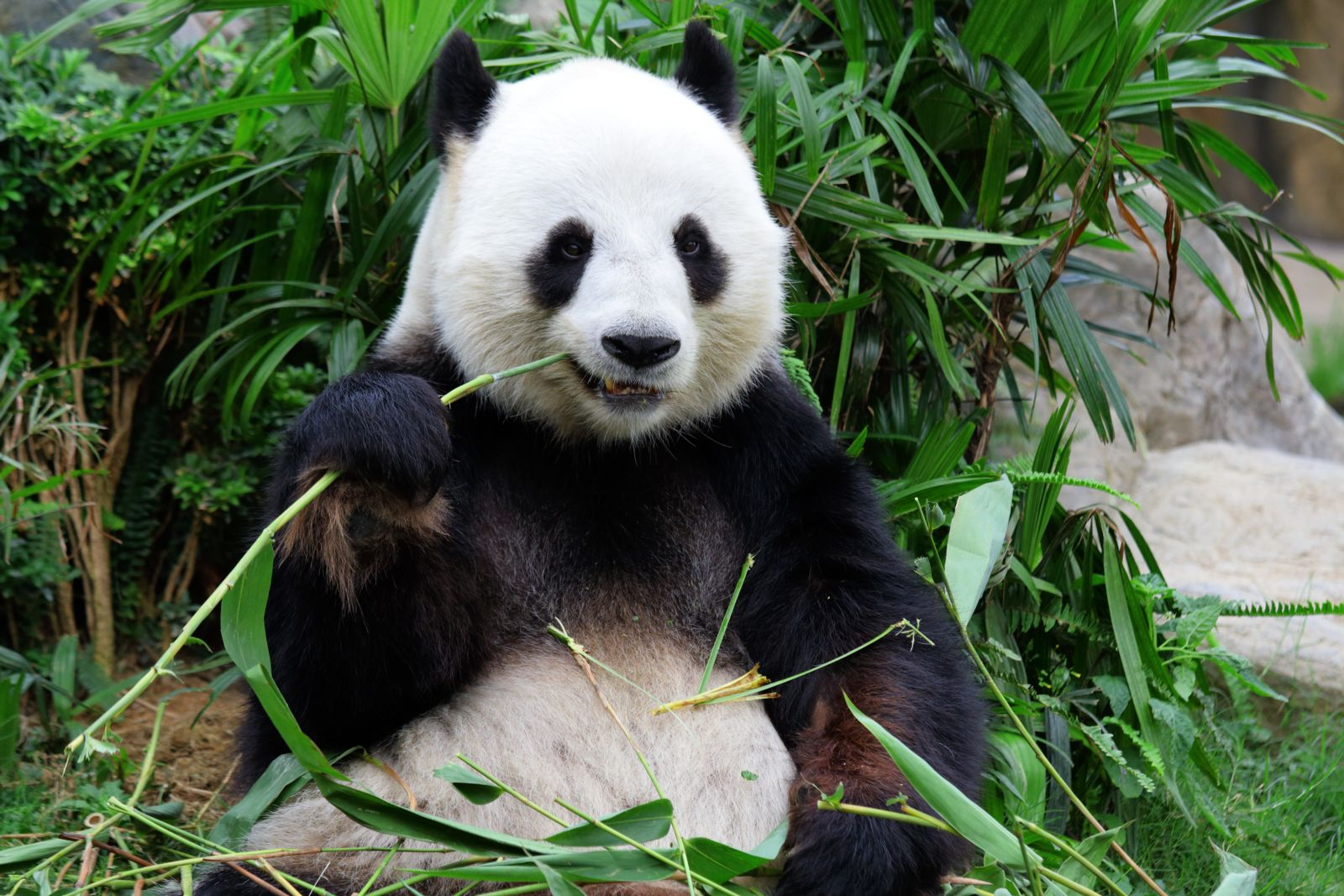 Bamboo socks may be the coolest things since pandas!