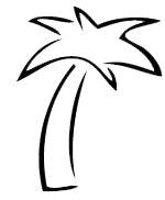 Palm Tree Newlywed Name Change Attorney
