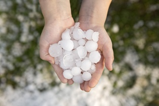 Hands Holding Hail After a Serious Hail Storm