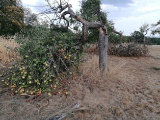 Orchard That Has Suffered Damages After a Severe Windstorm
