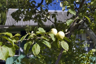 Hail Damage Can Mean Disaster for Orchards and Farms