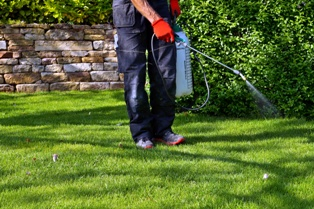 Homeowner Using Roundup on the Yard