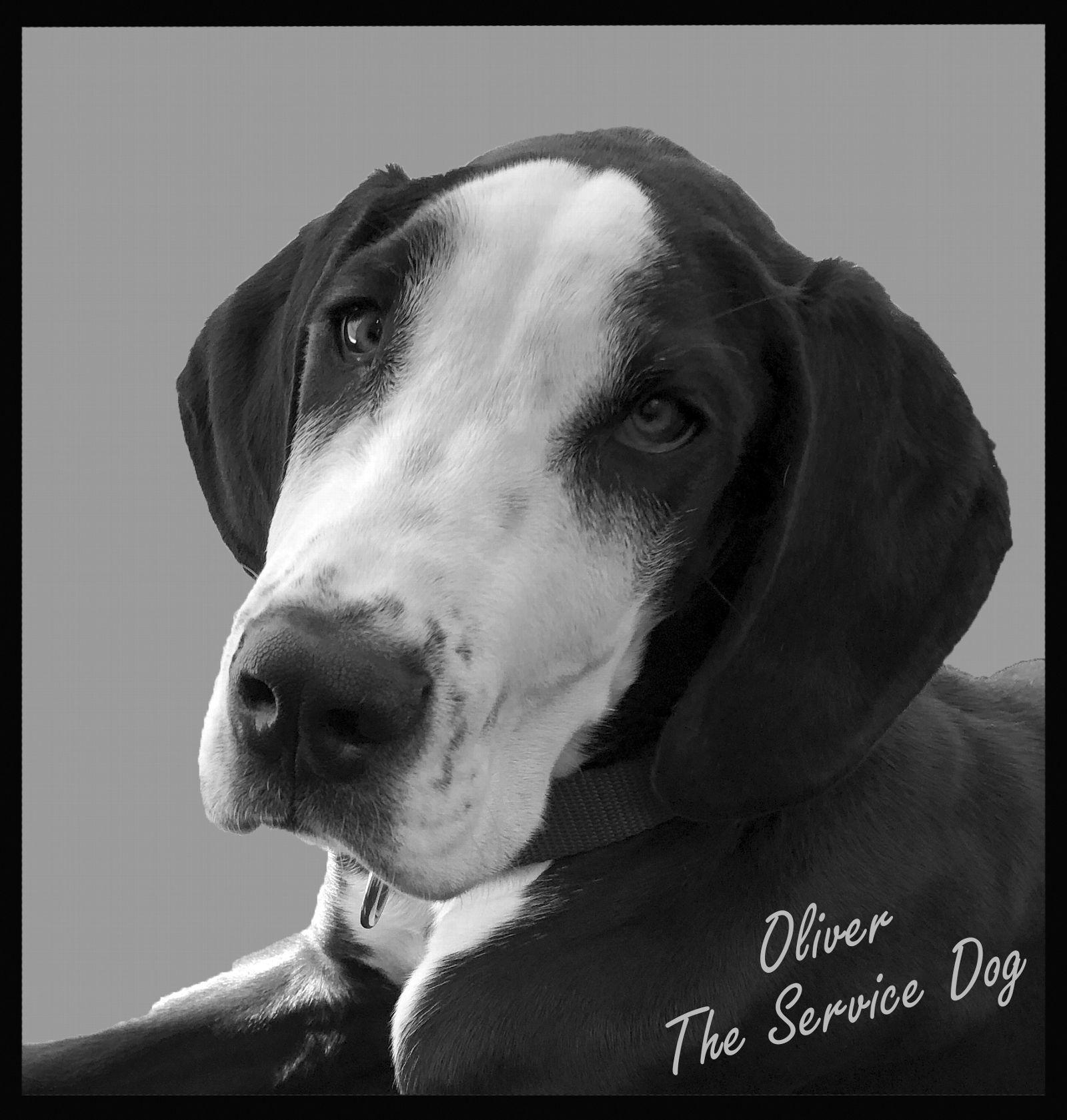 Oliver The Service Dog