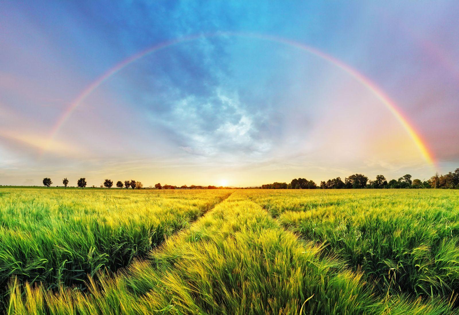 rainbow in a field