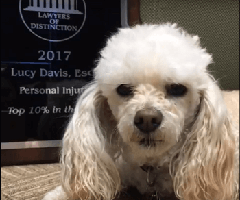 Lucy the dog won Lawyer of Distinction