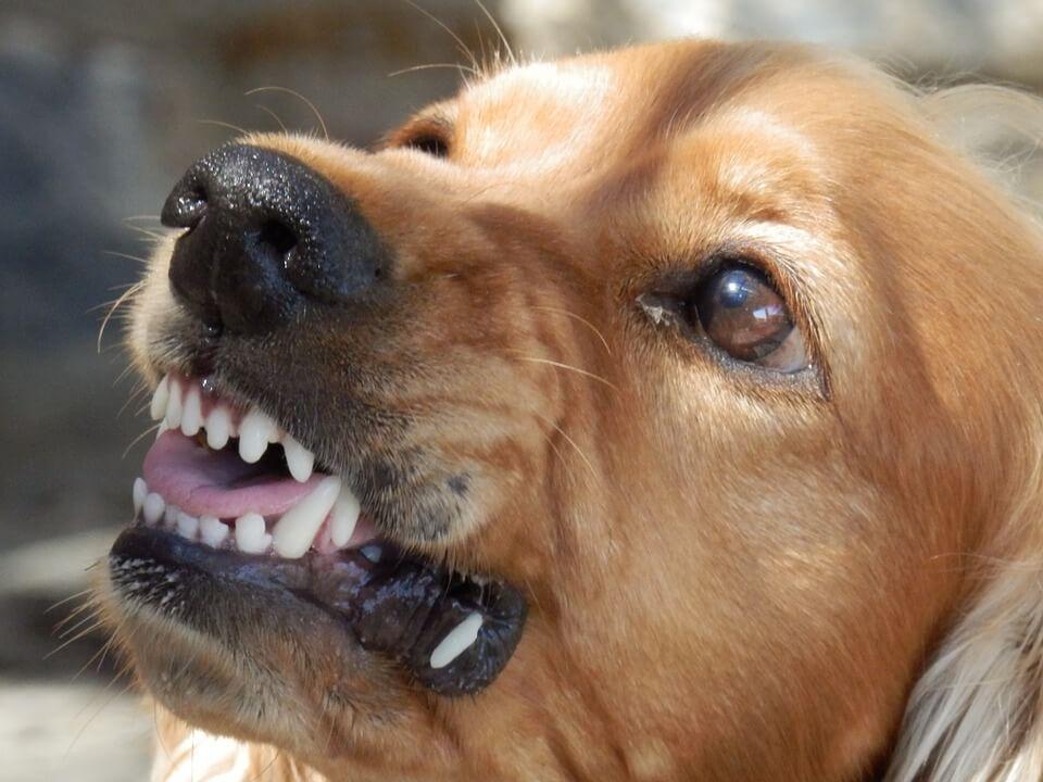 Angry dog biting