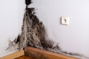 Black Mold Growing on the Wall of a Military Housing Unit