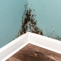 Mold in the Corner of a Military Housing Cardoza Law