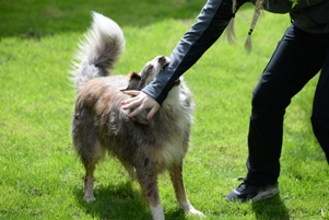 dog biting person's arm in public park