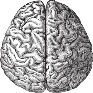 sketch of left and right hemispheres of the brain