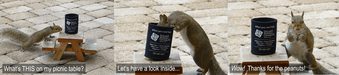 Koozie contest winner with squirrel eating out of Koozie on picnic table
