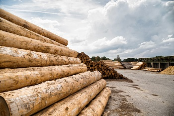 Piles of logs at lumber yard near Columbus, Ohio