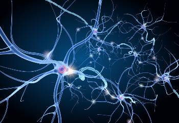 Nerve grafts restore feeling and function