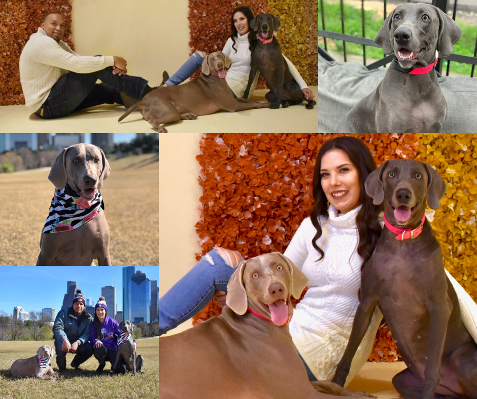 Nola and Austin, dogs of Houston attorney, Ashley Washington