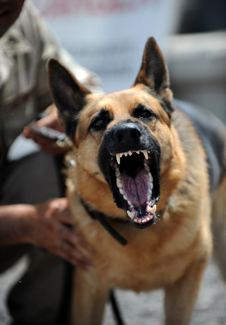 a police officer is holding the leash of an aggressive dog who is snarling at the camera. In Florida, you can get a criminal charge if your dog bites, attacks or injures someone. Our Fort Lauderdale and South Florida Criminal Attorneys can help