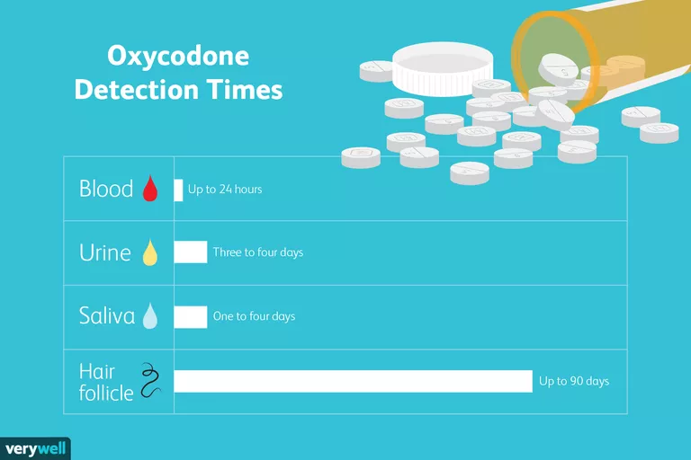an infogrpahic shows how long oxycodone stays in your body and in your system, whether it is in your blood, hair, urine or saliva
